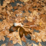 La fatina adagiata sulle foglie