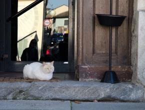 Il gatto guardiano dell'enoteca