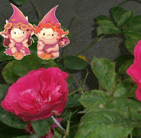 Gnomi sulle rose
