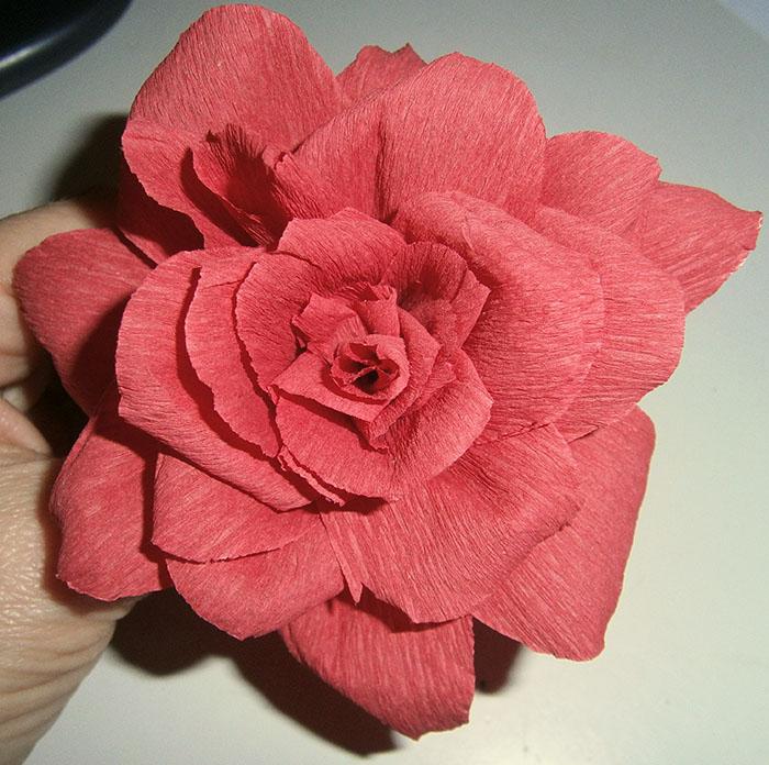 La rosa di carta crespa