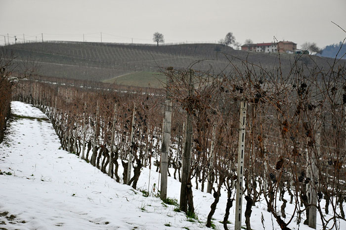 Langhe d'inverno